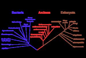 450px-phylogenetic_tree-svg